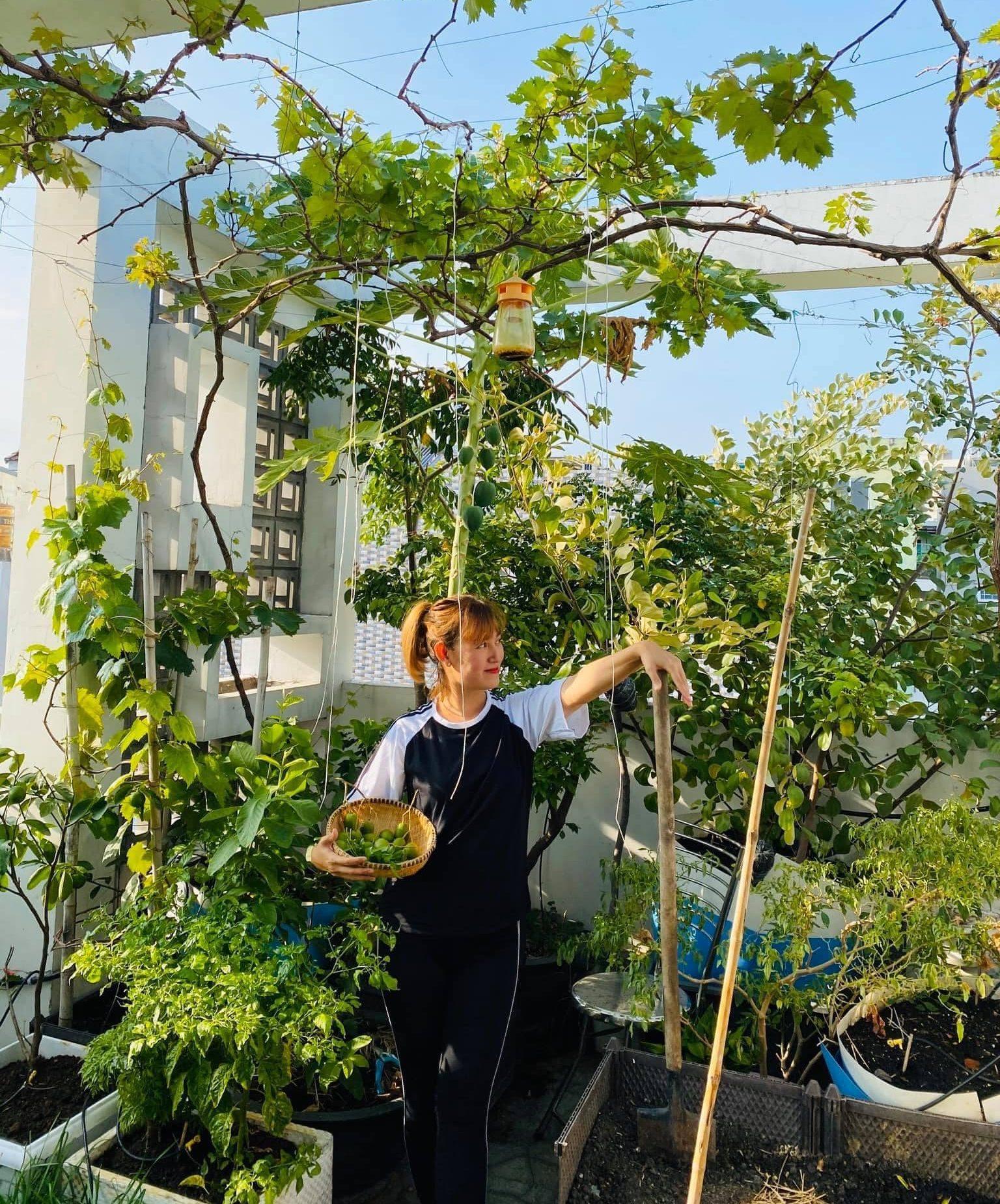 chăm sóc khu vườn trên sân thượng