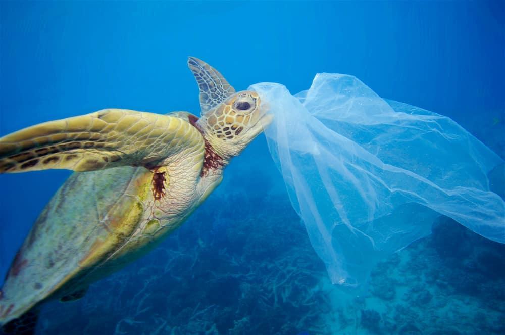 lối sống không rác thải zero waste 7