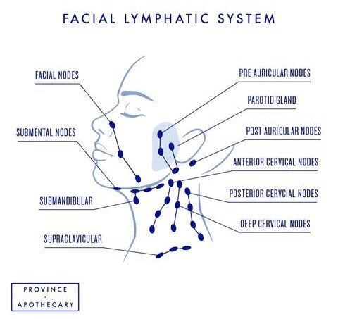 massage hệ bạch huyết