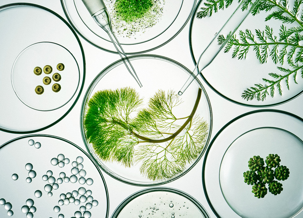Mỹ phẩm thuần chay có nguồn gốc 100% từ thực vật